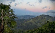 Jamaicas blå berg