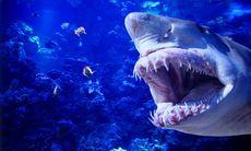 Så skyddar du dig mot hajar
