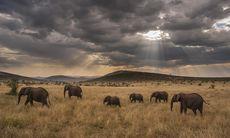 Majestätiskt: Så här har du aldrig sett Afrika förut