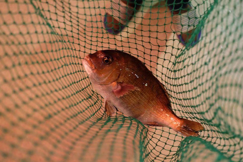 fishingrestaurant2.jpg