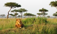 Safariturism skyddar Afrikas natur