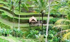 24 timmar i Ubud – Balis andliga hjärta