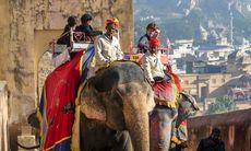 Elefantridning kan förbjudas på indiska turistorter