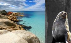 Tasmaniens vackraste naturområden – 10 favoriter