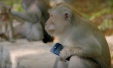 Templet där apor utpressar turister på lösensummor