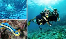 10 favoriter: Bästa dykningen i Thailand