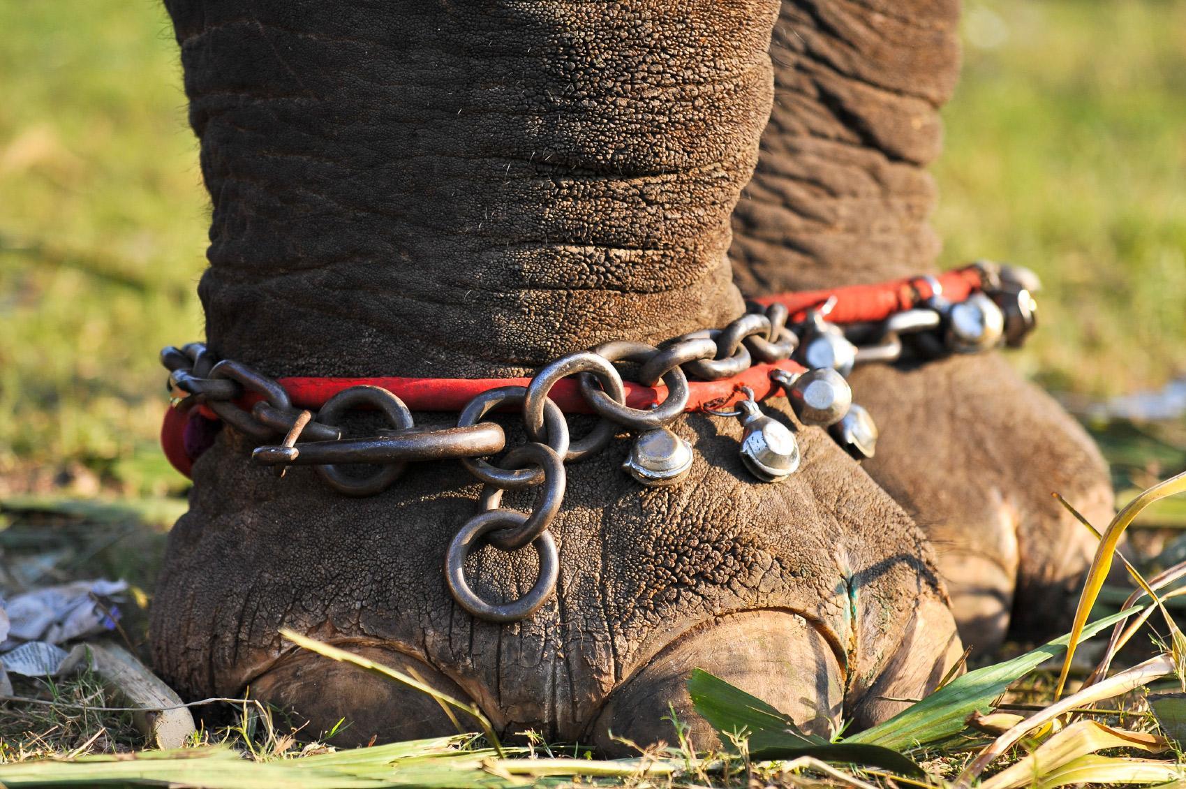 Har forbjuds turister att rida pa elefanter