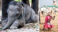 Djurrättsorganisationen: Här är världens 10 grymmaste turistattraktioner