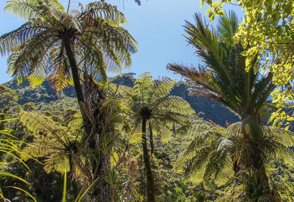 Punakaiki palmer.jpg
