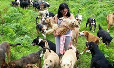 Hundhemmet Territorio de Zaguates i Costa Rica – ett himmelrike för dig som älskar hundar