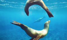 Galapágos: I naturens laboratorium