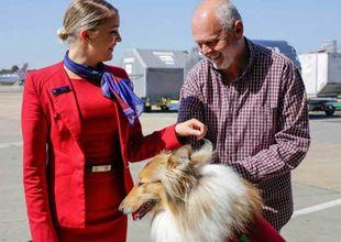 Alla hundars dag: Här är flygbolaget som erbjuder gratis flyg till hundar utan hem