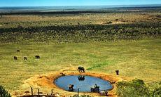 På safaricharter i Kenya