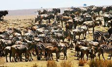 Afrikas bästa safariresor