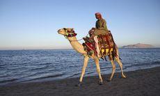 Egyptenresor ställs in resten av året