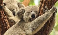 Australien - i djurens rike