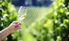 Vinfestivalen i Marlborough firar 30 år