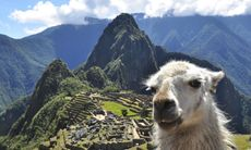 Turister gripna vid Machu Picchu