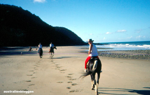 cape-tribulation-horse.jpg